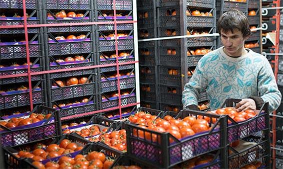 Витамины из овощей и фруктов при хранении разрушаются